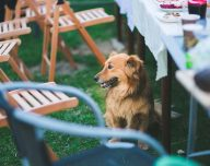 garden-party-animal-dog_2